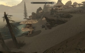 Huge mushrooms growing in Morrowind's ashy soil like trees.