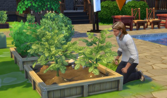Toby weeds the garden.