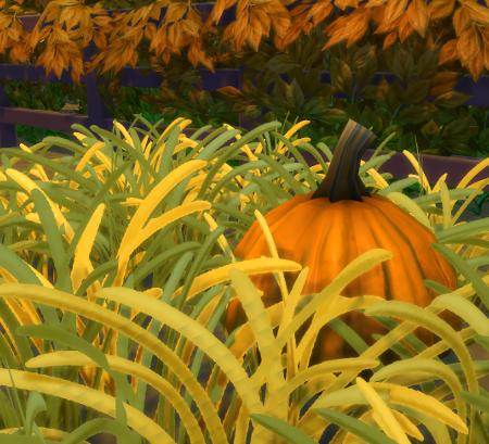Smaller pumpkin (orange) in the back. The patch would lie in front of it, the fence is all that is visible behind.