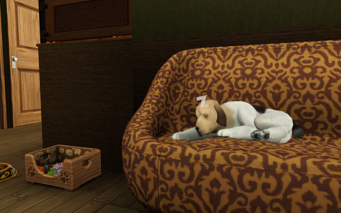 Razta sleeps on the couch. Hmmm. I should get us a new one.