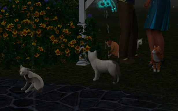 We checked in on Erika and Antwan (Sofia's parents) and found five cats!